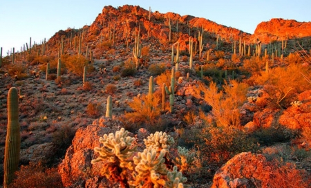 Autumn In Arizona - Deserts, Autumn, Arizona, Nature