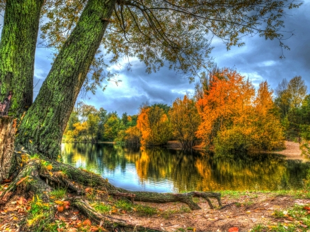 Autumn Forest - forest, autumn, shore, leaves, nature, river, trees, sky