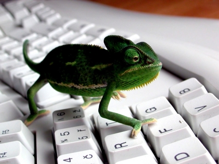 ghecko tech - computer, lizard, keyboard, ghecko