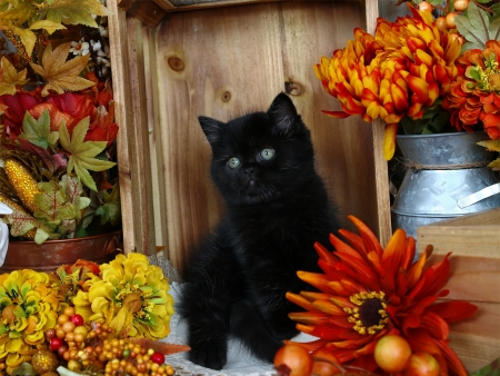 Fall kitty - fall, autumn, cozy, kitty, black, adorable, cat, sweet, flowers, kitten