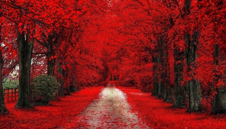 Red Autumn Path - red, forest, autumn, path, nature, trees