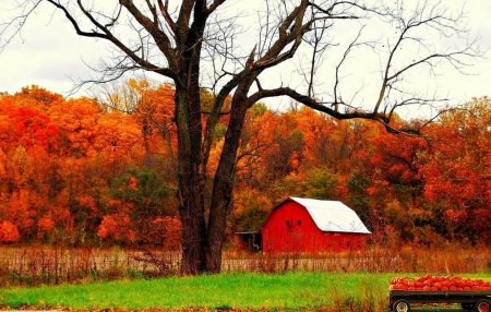 Autumn In Indiana - Trees, Barn, Nature, Indiana, Autumn, Forests