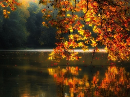 fall leaves over lake - fall, lakes, leaves, nature, over