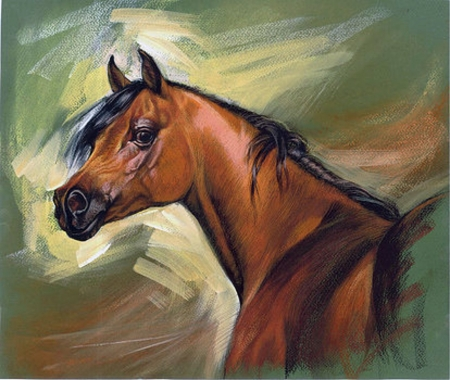 Arabian Horse Horses Animals Background Wallpapers On Desktop