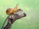 Snail and lizard