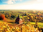 Autumn Vineyard Colors,Germany