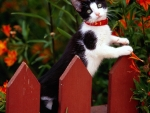Kitten Climbing Up on Fence