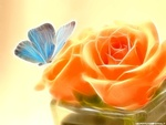 Butterfly n Roses