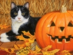 Cat & Pumpkin