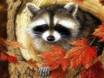 Raccoon in Tree Hole