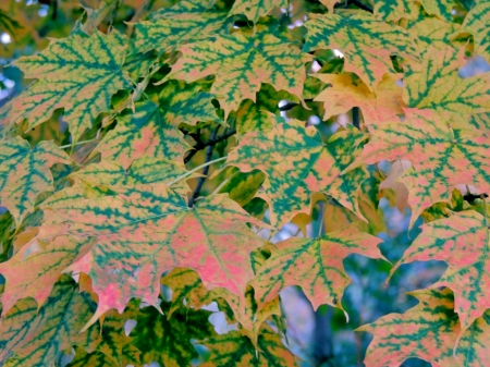 Leaves Of Autumn - Forest, Leaves, Photography, Autumn, Nature