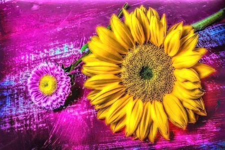 ✿⊱•╮Moody of Flowers╭•⊰✿ - pink matsumoto, yellow, lovely still life, flowers, sunflower, love four seasons, photography, summer, nature