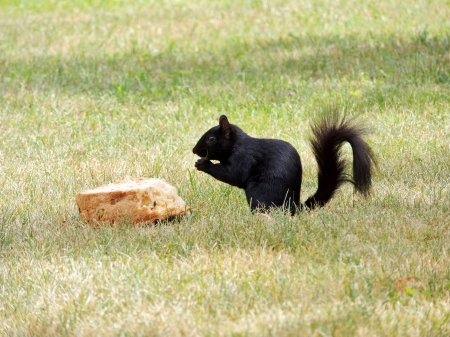Helping Himself - Summer, Grass, Bread, Animal, Photography, Squirrel