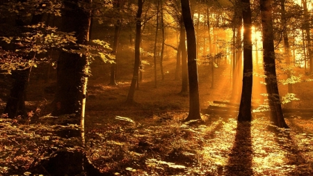 Sun rays in fall forest - fall, forest, sun rays, nature