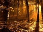 Sun rays in fall forest
