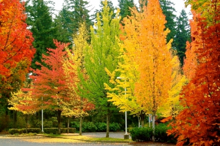 Colorful Leaves And Trees - Trees, Colorful, Nature, Leaves, Forests