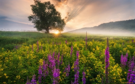 Meadow at Sunrise - flowers, meadow, sunrise, tree