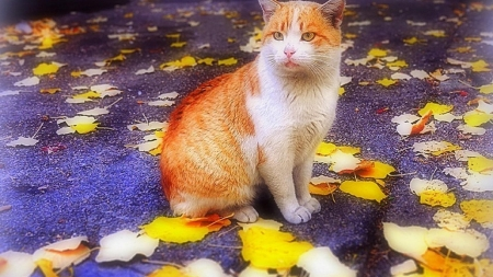 Cat in the Autumn - leaves, fall season, animal, cat, autumn