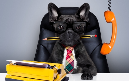 Busy dog - office, orange, caine, black, tie, animal, busy, phone, funny, dog