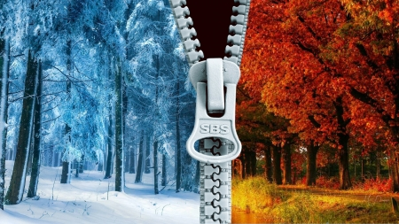 Seasons of the Forest - snow, fall, winter, zipper, forest, autumn, colors, Firefox Persona theme, abstract, trees