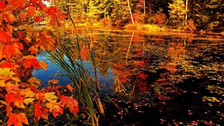 Autumn Lake - water, fall, forest, autumn, season, leaves, trees, lake, nature