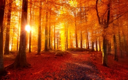 Golden autumn rays in forest - forest, fall, autumn, golden, sunlight, sunbeams, beautiful, park, trees, foliage, leaves, rays, path, walk, sunshine