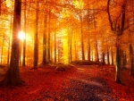 Golden autumn rays in forest