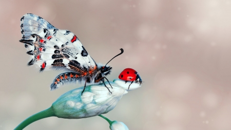 Butterfly and ladybug - red, mustafa ozturk, wings, ladybug, bokeh, butterfly, insect, white, blue