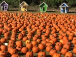 Pumpkins And Houses