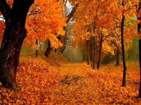 Fall beauty - forest, autumn, trees, orange