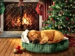 My Christmas Wishes - Dog F1C
