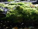Log Of Moss And Fungus
