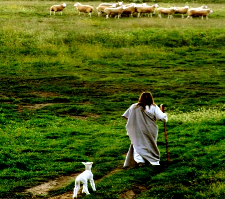 Found Lamb - Jesus, Sheep, Lamb, Animals, White