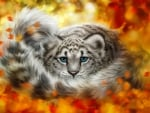 Wild autumn cat
