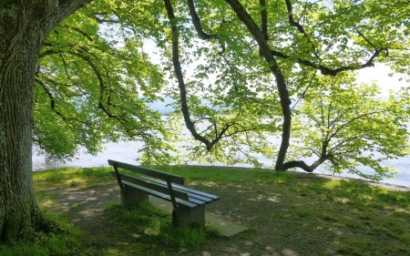 By Lake Constance - bench, summer, tree, lake