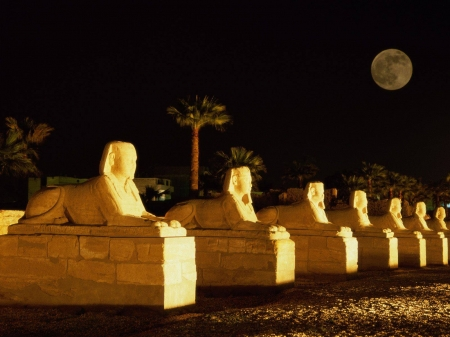 Row of Sphinx - Egypt, night, statue, monument, moon, ancient, Sphinx
