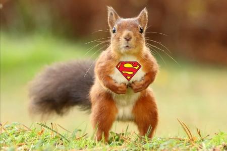 It S Super Squirrel Squirrels Animals Background Wallpapers On