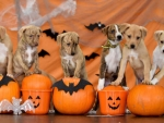 Halloween And Adopt A Dog