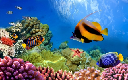 Underwater in the Great Barrier Reef - Sea, Fish, Nature, Oceans, Coral Reefs