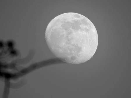 Beautiful Moon - Photography, Moon, Sky, Space