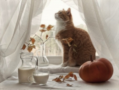 autumn still life - autumn, cool, photography, cats, animals