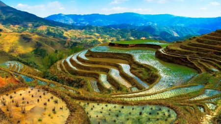 Wonderful Terraces - Field, Terraces, Nature, Plants