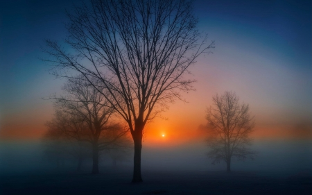 Fog at sunrise - sun, trunks, fog, cold, photography, nice, sunrise, morning, scenery, amazing, photo, dawn, foam, sky, trees, cool, awesome, branches, scene, landscape