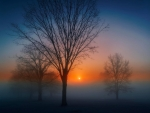 Fog at sunrise