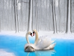 Winter of the swans