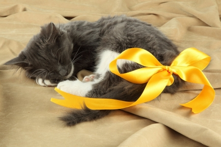 kitten with yellow ribbon - ribbon, yellow, kitten, cats, animals