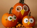 Halloween pumpkin owls