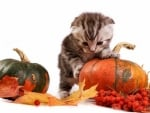 Cute Halloween Kitten