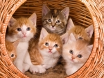 Kittens on Large Basket