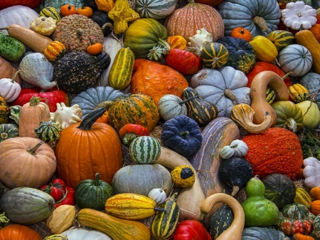 Harvest - Pumpkins, Colorful, Abstract, Harvest, Photography